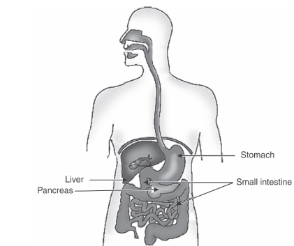 human alimentary canal diagram draw a neat diagram depicting human alimentary canal and ...