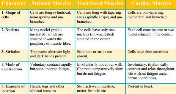 Differentiate Between Striated Unstriated And Cardiac Muscles On